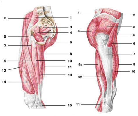 Коррекция ног Анатомия